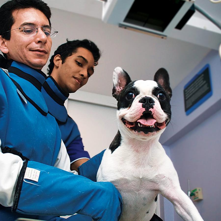 """Dr Rômulo Braga, do CRV Imagem: """"A radiografia do pescoço e cabeça é o método de investigação inicial para a Síndrome dos Braquicefálicos""""."""