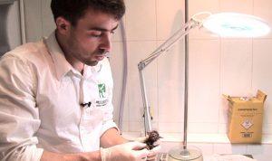 Um negócio silvestre, com Dr Rafael Nudelman