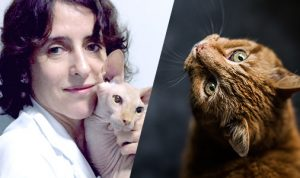 FIV e FeLV: Dra Sheila Medeiros tira as suas dúvidas