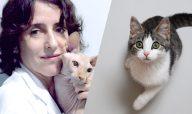 Gatos e FIV: Transmissão, Prevenção e Vacina (pt 1)