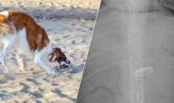 Obstrução por Corpo Estranho: O Que É, Sintomas e Diagnóstico